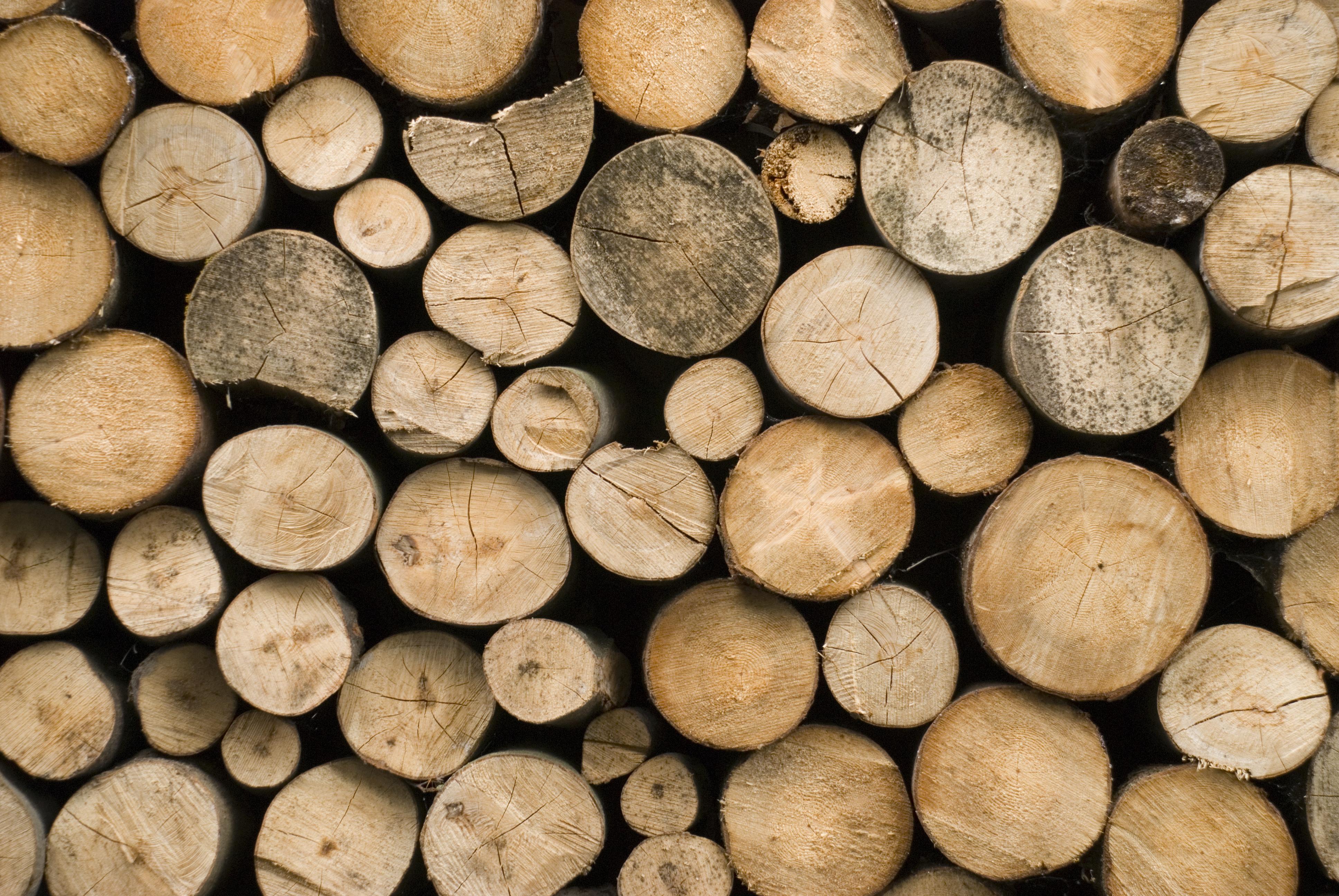 Constructions en bois Casarbor